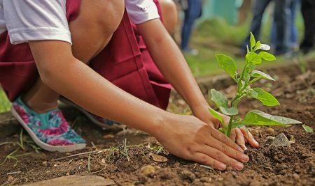 Инициатива за засаждане на дървета край Варна и Добрич